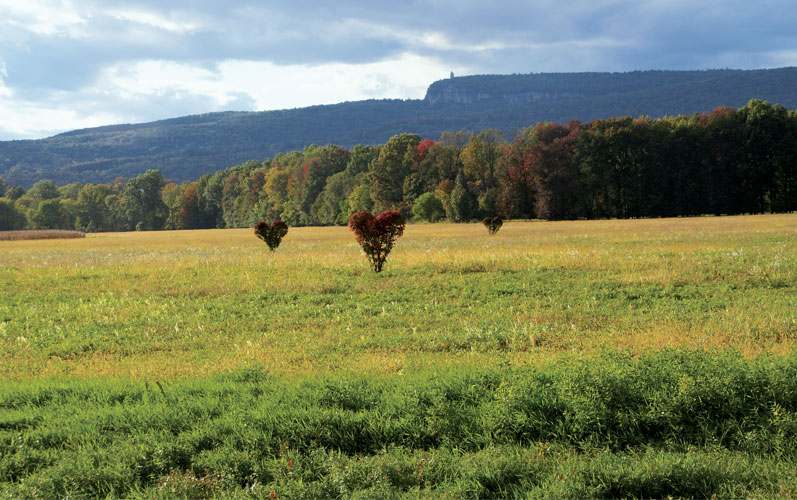 Shawangunk Mountain Scenic Byway meadow with heart trees